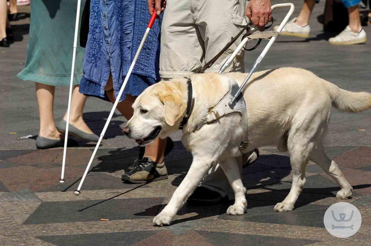 Ανάρτηση στα μαγαζιά σήματος πρόσβασης σκύλων βοηθείας