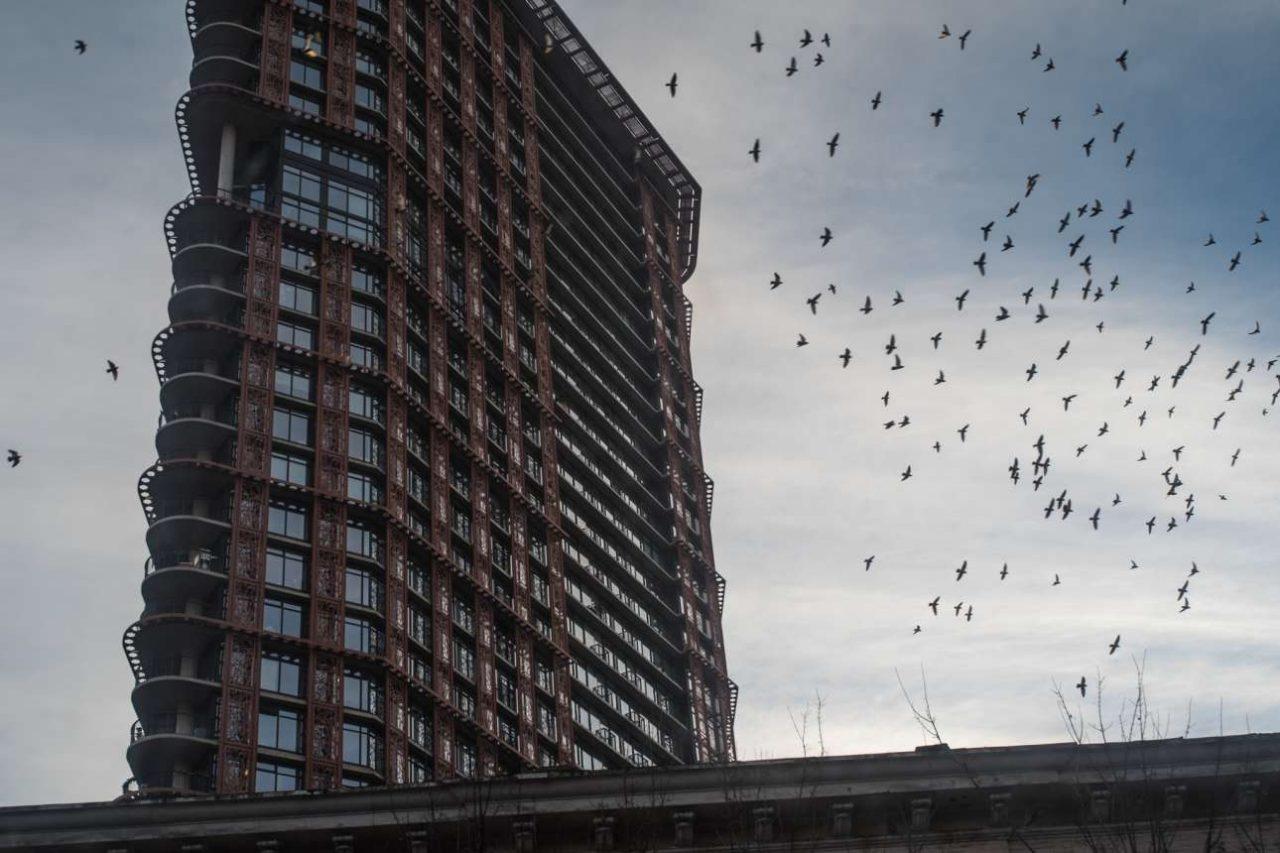 Οι ουρανοξύστες οδηγούν σε τραγικό θάνατο 100 εκατ. πτηνά ετησίως!