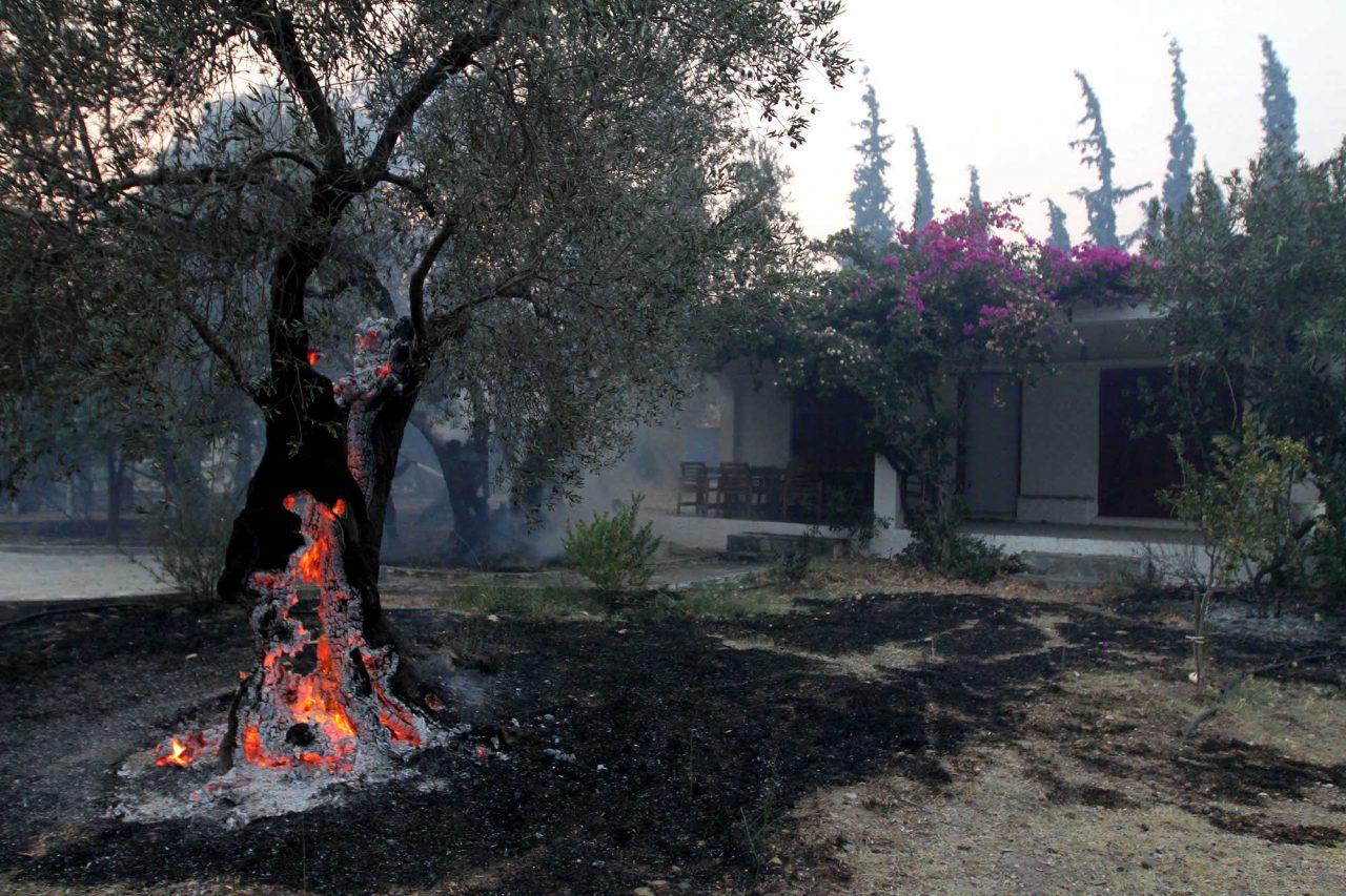 Πυρκαγιά σε Εύβοια: άμεση ανάγκη αποζημιώσεων σε επαγγελματίες Εστίασης