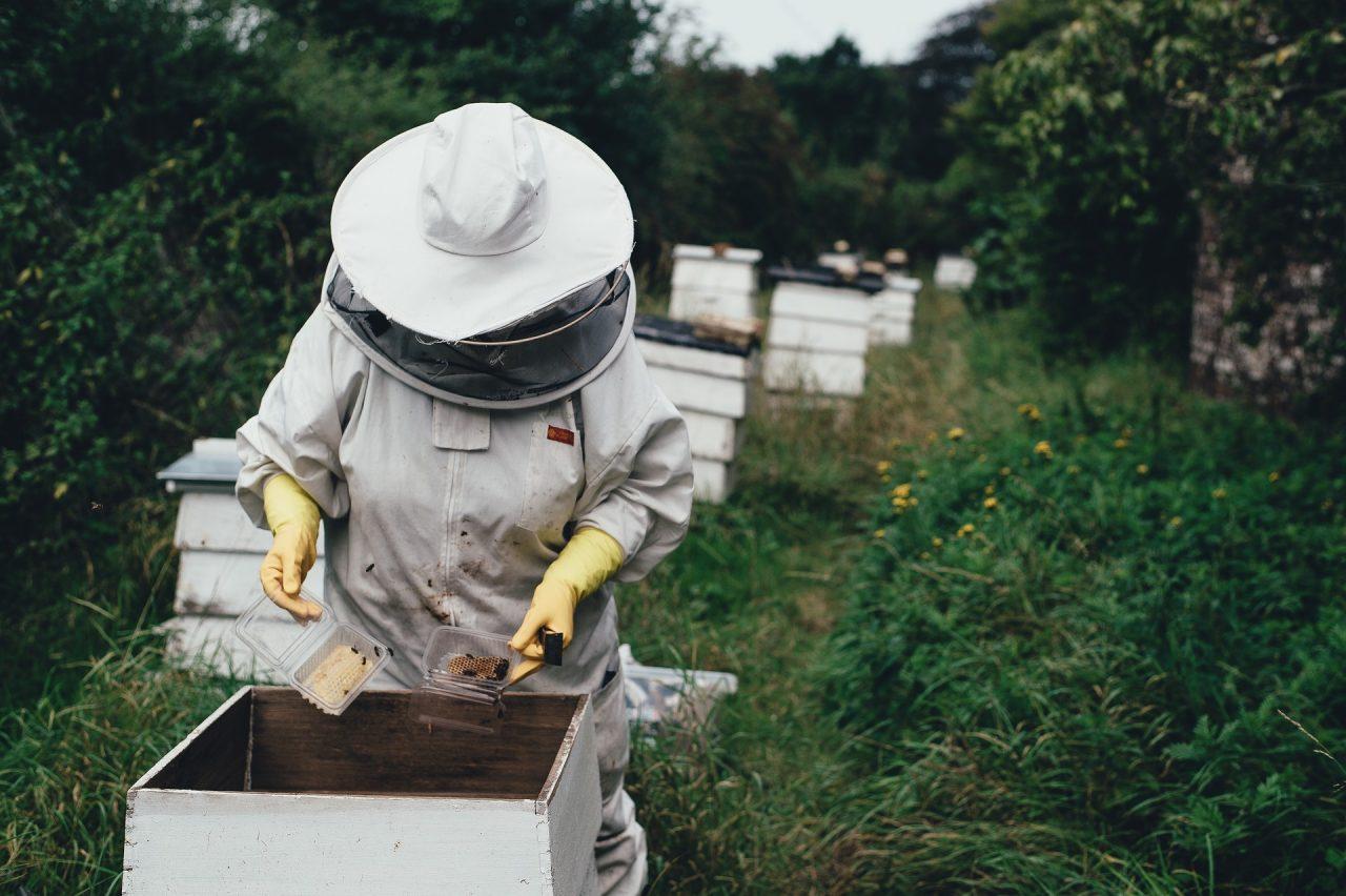 Γάλα αμυγδάλου: μια απειλή για τις μέλισσες